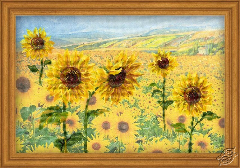 Field Of Sunflowers by RIOLIS - 0010-PT