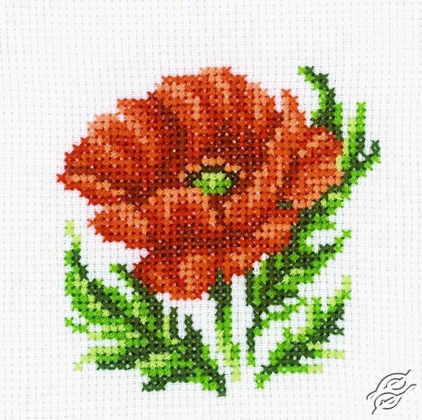 Poppy by RTO - H167