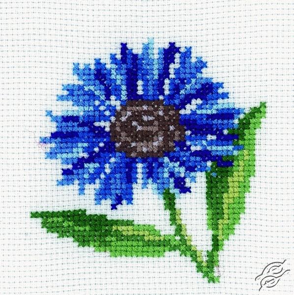 Cornflower by RTO - H171