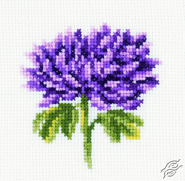 Chrysanthemum by RTO - H166