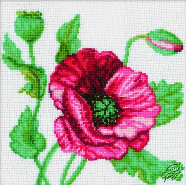 Poppy II by RTO - M083