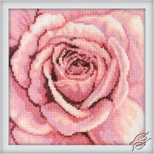 The Pink rose by RTO - C070
