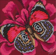 Cushion With Butterfly II by Collection D'Art - 5078