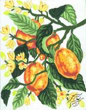 3.162 A Blossoming Lemon Tree Branch by Collection D'Art - 3162