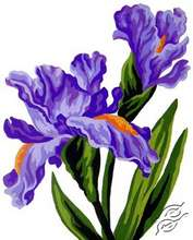 3.286 Irises by Collection D'Art - 3286