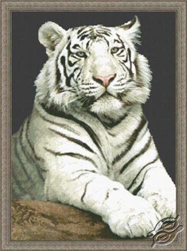 The Stare - White Tiger by Kustom Krafts - 20213