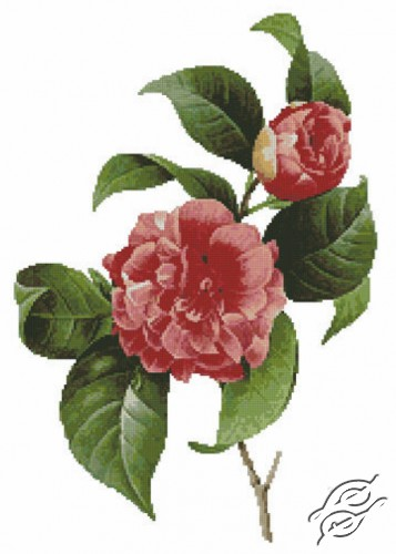 Common Camellia by Free Cross Stitch Online - GSF00021