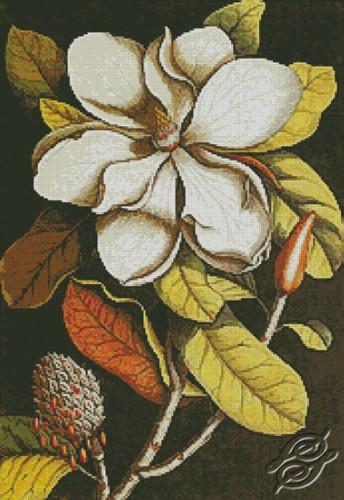 Flower I by Free Cross Stitch Online - GSF00024