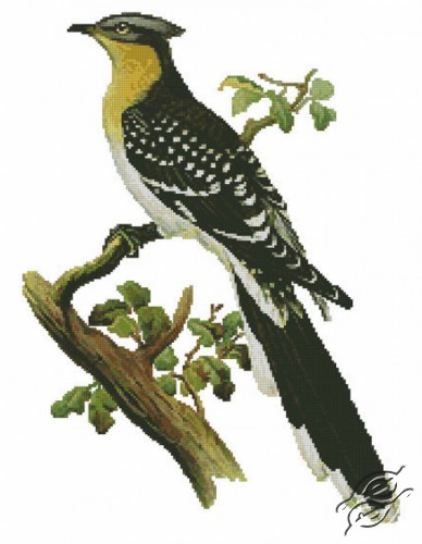 Great Spotted Cuckoo by Free Cross Stitch Online - GSF00028