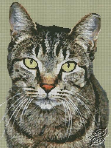 Cat by Free Cross Stitch Online - GSF00031