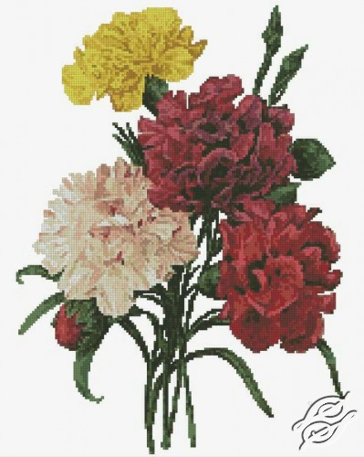 Carnations by Free Cross Stitch Online - GSF00041