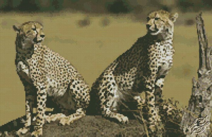 Cheetahs by Free Cross Stitch Online - GSF00043