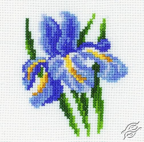 Iris by RTO - H172