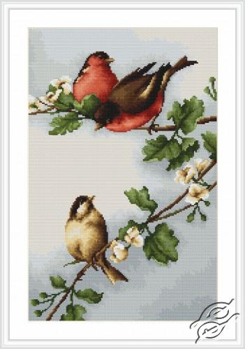 Birds by Luca-S - B216