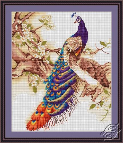 Peacocks by Luca-S - B459