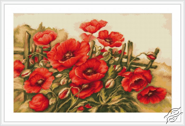 Poppies of Field by Luca-S - B490