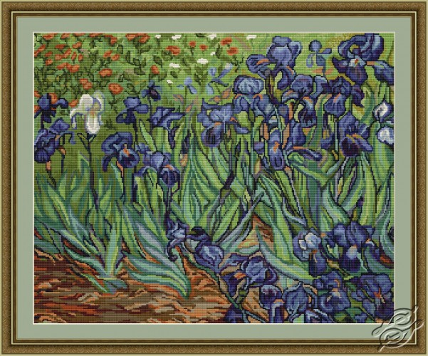 Irises by Luca-S - B444