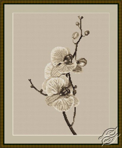Orchid by Luca-S - B291