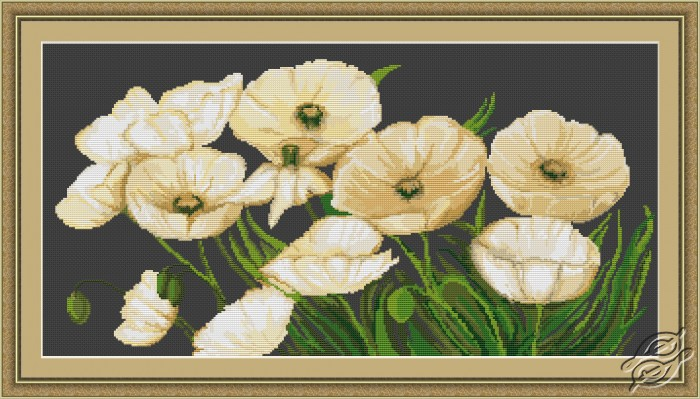White Poppies by Luca-S - B274