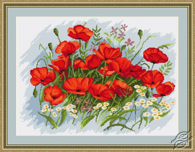 Poppies by Luca-S - B272