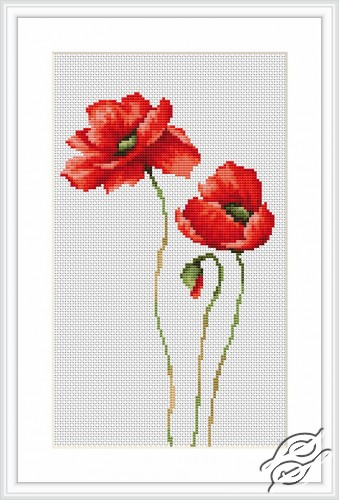 Poppies by Luca-S - B2225