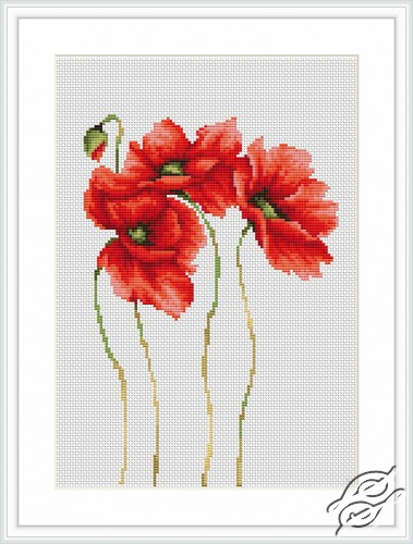 Poppies by Luca-S - B2224