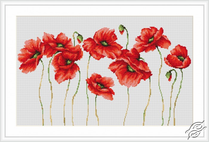 Poppies by Luca-S - B2223