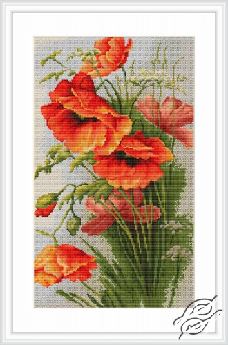 Poppies by Luca-S - B213