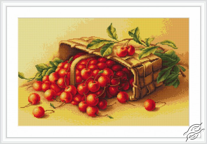 Basket of Cherry by Luca-S - B498
