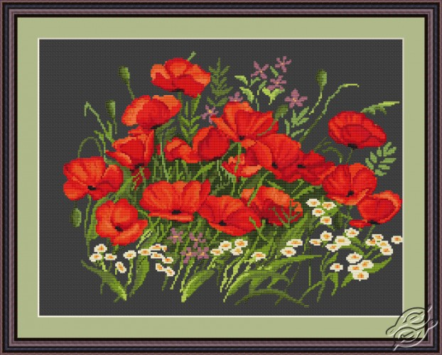 Poppies by Luca-S - G275
