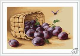 Basket of Plums by Luca-S - G496
