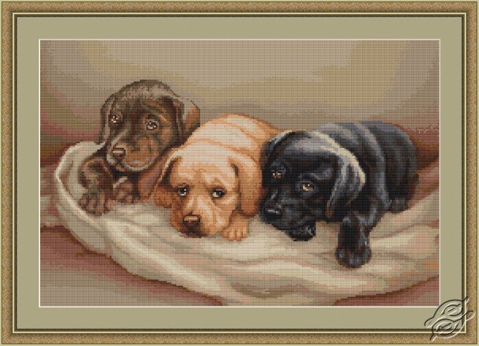 Three Dogs by Luca-S - G434