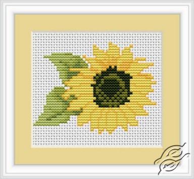 Sunflower by Luca-S - B031