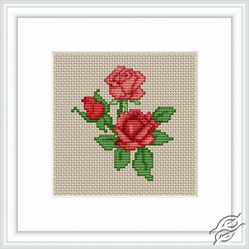 Roses by Luca-S - B033