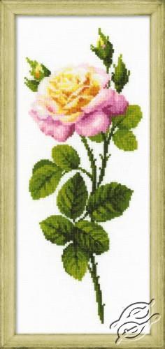 Wonderful Rose by RIOLIS - 1331