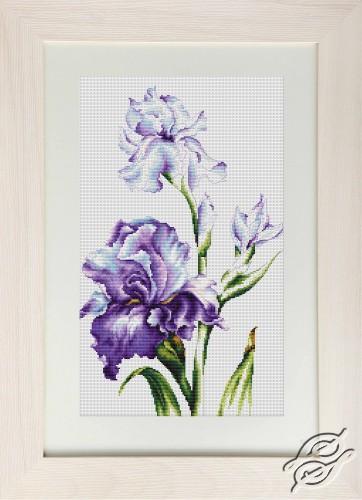 Irises I by Luca-S - B2251