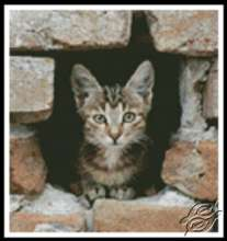Kitten in Wall by Kustom Krafts - 20343
