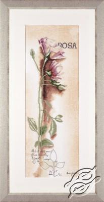 Rosa - Botanical by Lanarte - PN-0008050