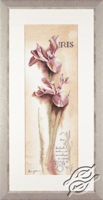 Iris - Botanical by Lanarte - PN-0008049