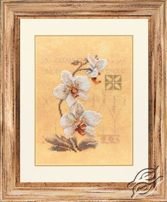 Three Orchids by Lanarte - PN-0008008