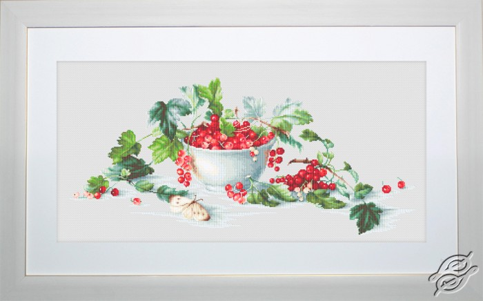 Red Currants by Luca-S - B2260