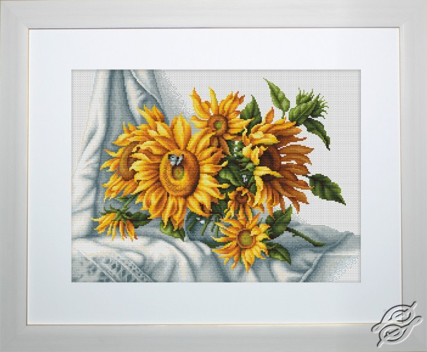 Sunflowers by Luca-S - B2264