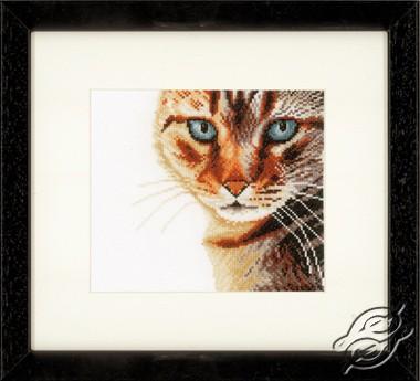 Cat Close-up by Lanarte - PN-0021202
