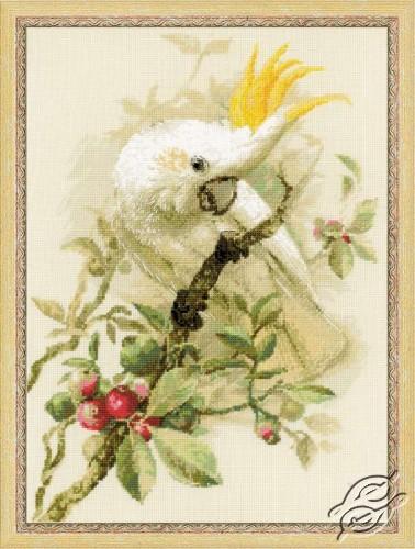 White Cockatoo by RIOLIS - 1362