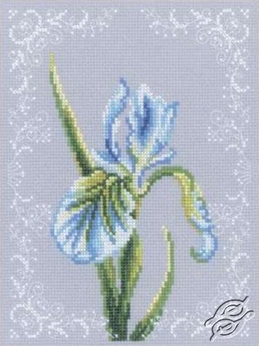 Iris White by RTO - C154