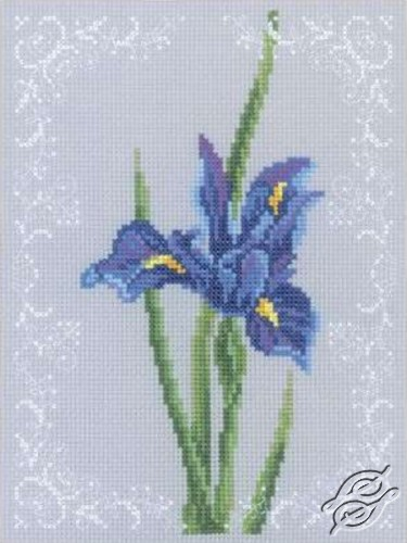 Iris Blue by RTO - C155