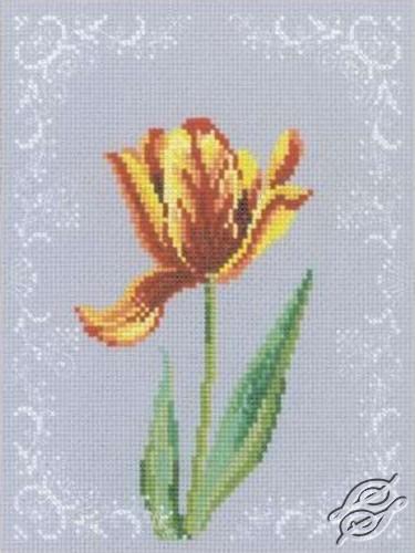 Tulip by RTO - C156