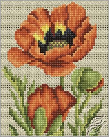 Garden Poppy by RTO - C177
