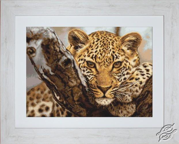 Leopard by Luca-S - B525
