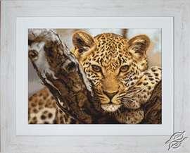 Leopard by Luca-S - G525